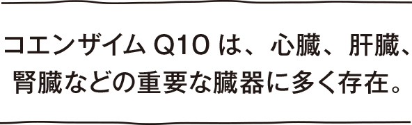 コエンザイムQ10は、心臓、肝臓、腎臓などの重要な臓器に多く存在
