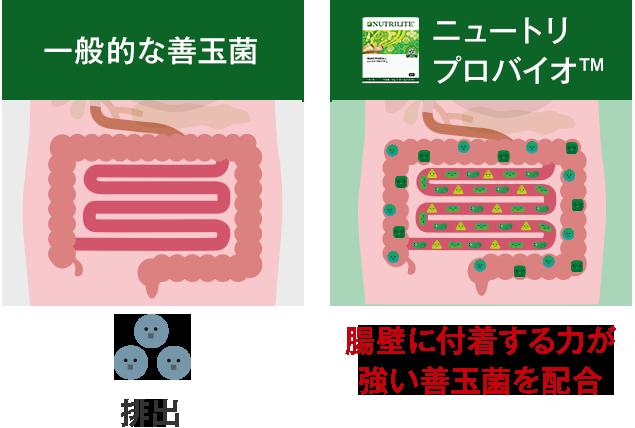5種類の善玉菌