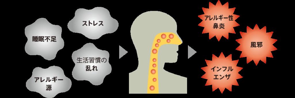気道の細菌叢(フローラ)のバランスが悪化すると、免疫力が低下し、アレルギー性鼻炎、風邪、インフルエンザ等にかかりやすくなる可能性があります。