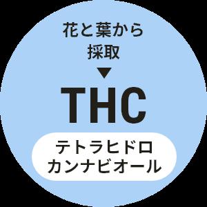 花と茎から採取→THC テトラヒドロカンナビジオール